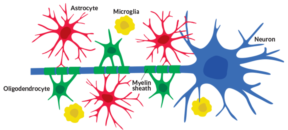 Xl 082215 glia diagram 730