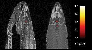 Bennett salmon figure1