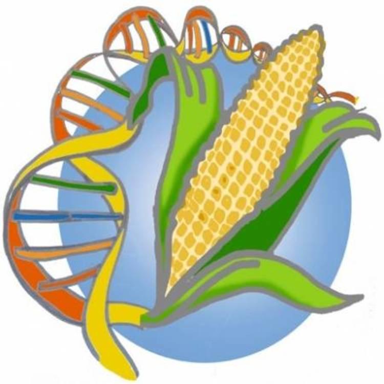 """Résultat de recherche d'images pour """"OGM"""""""