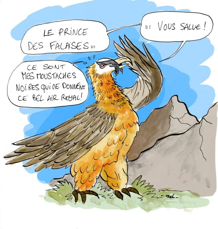 Gypaete Barbu Prince Des Falaises Alpines Sur Kidi Science Echosciences Grenoble