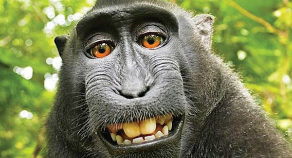 Lg monkey selfie article 201804131946