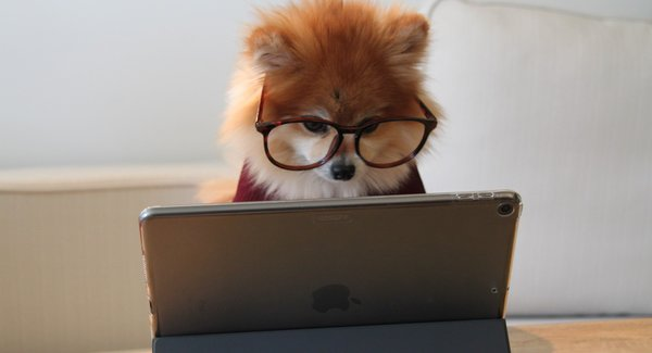 Lg cookie the pom gysmaocsdqs unsplash2
