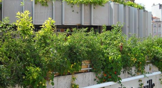 jardiniers du bitume echosciences grenoble. Black Bedroom Furniture Sets. Home Design Ideas