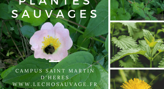 Lg plantes sauvages campus smh 4